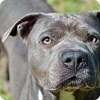 Adopt A Pet :: EVA - Brooksville, FL
