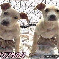 Adopt A Pet :: SKY - San Antonio, TX