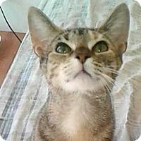 Adopt A Pet :: Leda - New York, NY