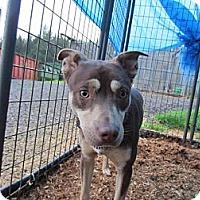 Adopt A Pet :: Dundee - Tillamook, OR