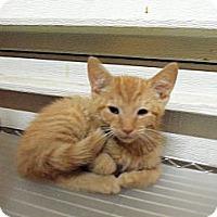 Adopt A Pet :: Baxter - Catasauqua, PA