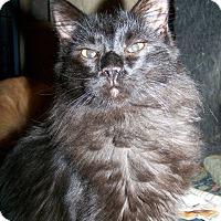 Adopt A Pet :: Earl Grey - St. Louis, MO