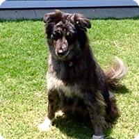Adopt A Pet :: BOBBE - Valley Village, CA