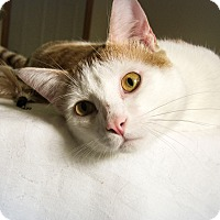 Adopt A Pet :: Elliot (at Woodbury Petsmart) - Roseville, MN