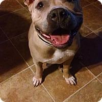 Adopt A Pet :: Rosie - Mission Viejo, CA