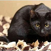 Adopt A Pet :: JEDD - Dallas, TX