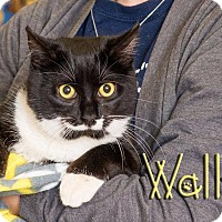 Adopt A Pet :: Wally - Somerset, PA