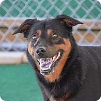 Adopt A Pet :: Sampson - Athens, AL