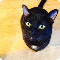 Adopt A Pet :: Phil - Des Moines, IA