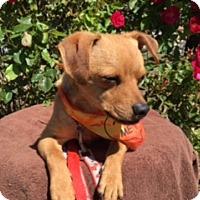 Adopt A Pet :: RAYDOM - Elk Grove, CA