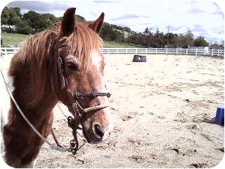 Pony - Other Mix for adoption in El Dorado Hills, California - Chico