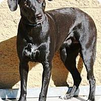 Adopt A Pet :: Mandee - Gilbert, AZ