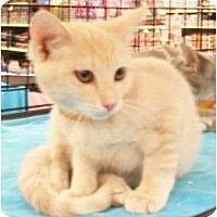 Adopt A Pet :: Fitzy - Reston, VA