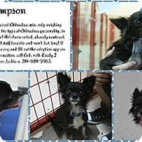 Adopt A Pet :: Sampson - Rockwall, TX