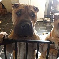 Adopt A Pet :: Mia - pending - Mira Loma, CA