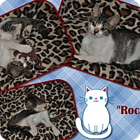 Adopt A Pet :: Rocky - Chattanooga, TN