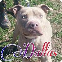Adopt A Pet :: Dallas - Union City, TN