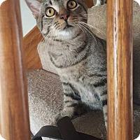 Adopt A Pet :: Elan - South Bend, IN