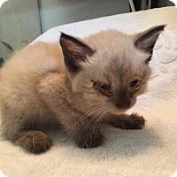 Adopt A Pet :: Emily - Melbourne, FL
