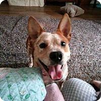 Adopt A Pet :: Spot - Houston, TX