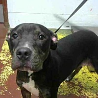 Adopt A Pet :: SOPHIA GRACE - Atlanta, GA