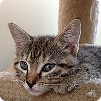 Adopt A Pet :: TINKER - 2013 - Hamilton, NJ