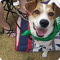 Adopt A Pet :: Peggy Sue - Indianapolis, IN