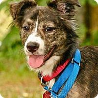 Adopt A Pet :: Phoebe - Hastings, NY