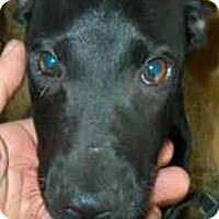 Adopt A Pet :: Boone - dawson, GA