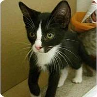 Adopt A Pet :: Zoro - Davis, CA