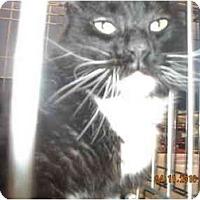 Adopt A Pet :: The Mayor - Riverside, RI