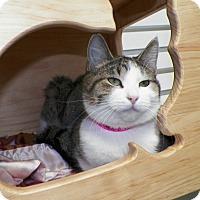 Adopt A Pet :: Bubbles - Dover, OH