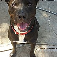 Adopt A Pet :: Hudson - Los Angeles, CA