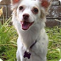 Adopt A Pet :: Hannah - La Habra Heights, CA