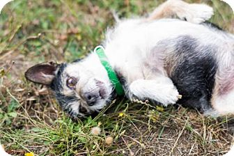 Terrier (Unknown Type, Medium) Mix Dog for adoption in Reedsport, Oregon - Ares