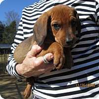 Adopt A Pet :: CLETUS - Lincolndale, NY