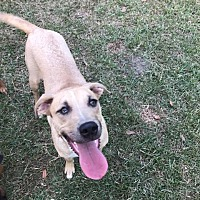 Adopt A Pet :: Bolt - Lake Charles, LA