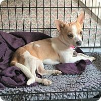 Adopt A Pet :: Ivy - Homewood, AL