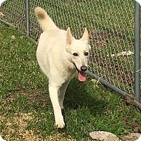 Adopt A Pet :: Mira - Houston, TX