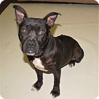 Adopt A Pet :: April - Savannah, GA