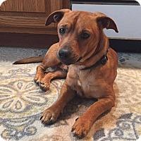 Adopt A Pet :: Oscar - New Oxford, PA
