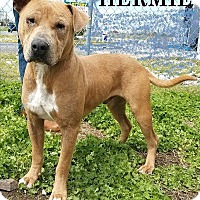 Adopt A Pet :: Hermie - Atlantic City, NJ