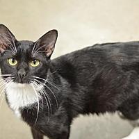 Adopt A Pet :: Capone170824 - Atlanta, GA