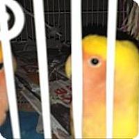 Adopt A Pet :: Grace - Lenexa, KS