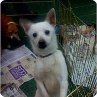 Adopt A Pet :: Remy - Fowler, CA