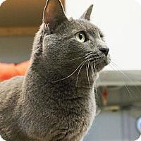 Adopt A Pet :: Stone (sooo sweet!) - Arlington, VA