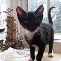 Adopt A Pet :: Brock - Kirkwood, DE