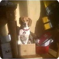 Adopt A Pet :: Molly - Toronto/Etobicoke/GTA, ON