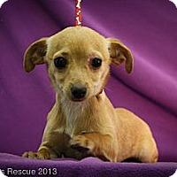 Adopt A Pet :: MistleToe - Broomfield, CO