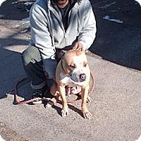 Adopt A Pet :: Mama - South Windsor, CT